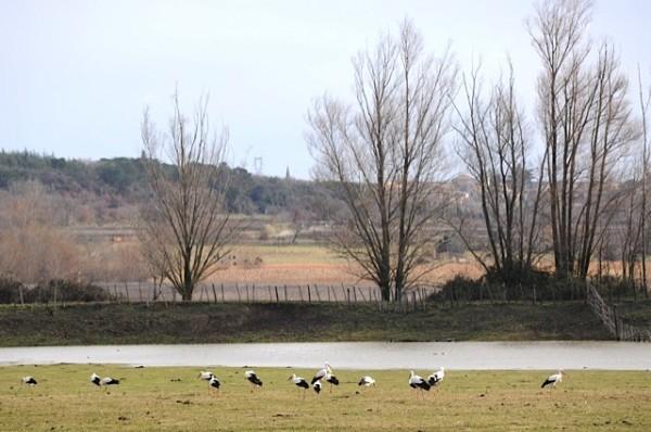 Halte des cigognes à l'étang
